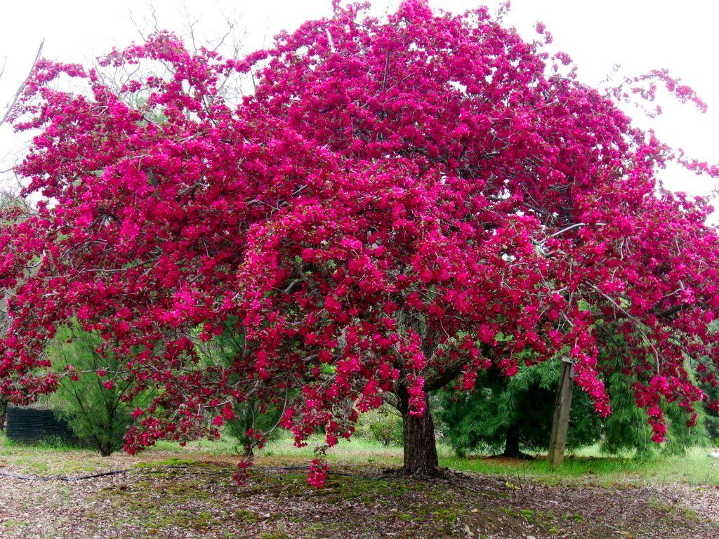 Stonegate gardens granby ct garden ftempo for Specimen trees